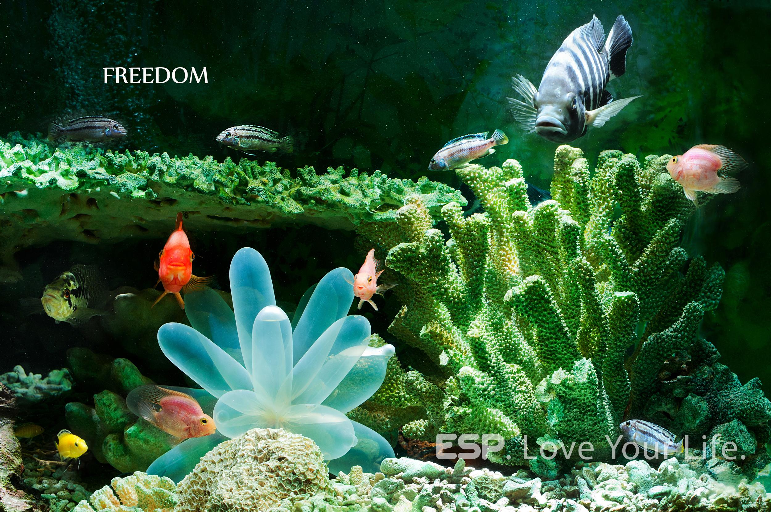壁纸 动物 水草 水生植物 鱼 鱼类 2500_1660